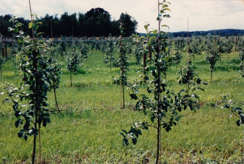 early days of the orchard