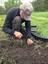 David planting onions