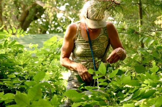 Marsha picking berries