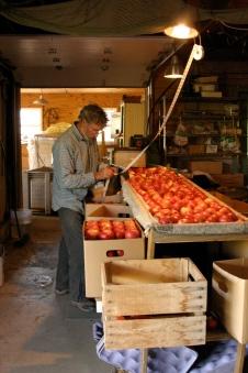 Grading apples