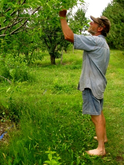 David looking at the apples