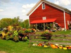 Farm in the fall