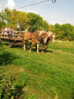 Horse-drawn hayrides