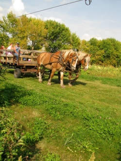 Horse-drawn hayrides