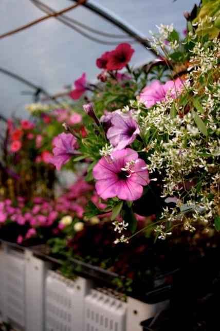 Marshas flower baskets