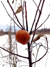 A frozen apple