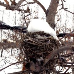 A remaining bird nest