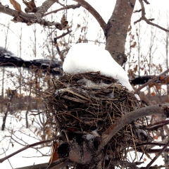 A remaining bird nest